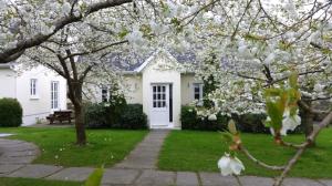 Elm with blossom