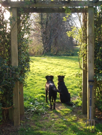 dog friendly cottages in ireland